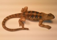Texas Spiny Hand Painted 5 inch Figurine Lizard