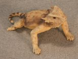 Round Tailed Horned Lizard