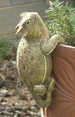 Horned Lizard Large Flower Pot Hanger