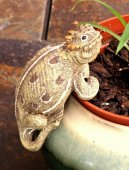 Horned Lizard Small Flower Pot Hanger