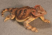 Plateau Horned Lizard Hand-Painted Figurines