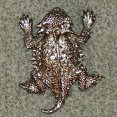 Nickel/Silver Plated
